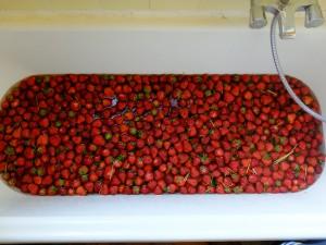 erdbeerwanne